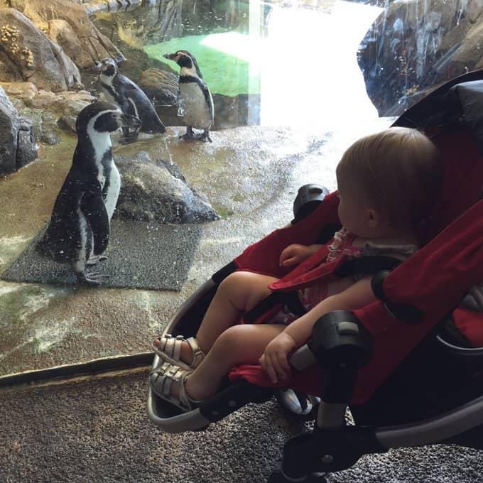 Clara_KC Zoo