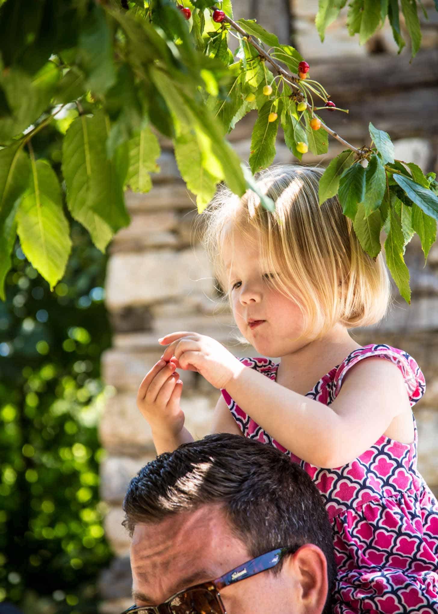 Molly_Cherry Trees