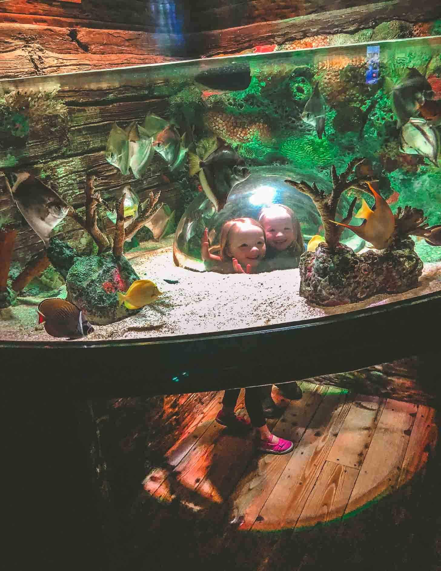 Molly and Clara_Aquarium