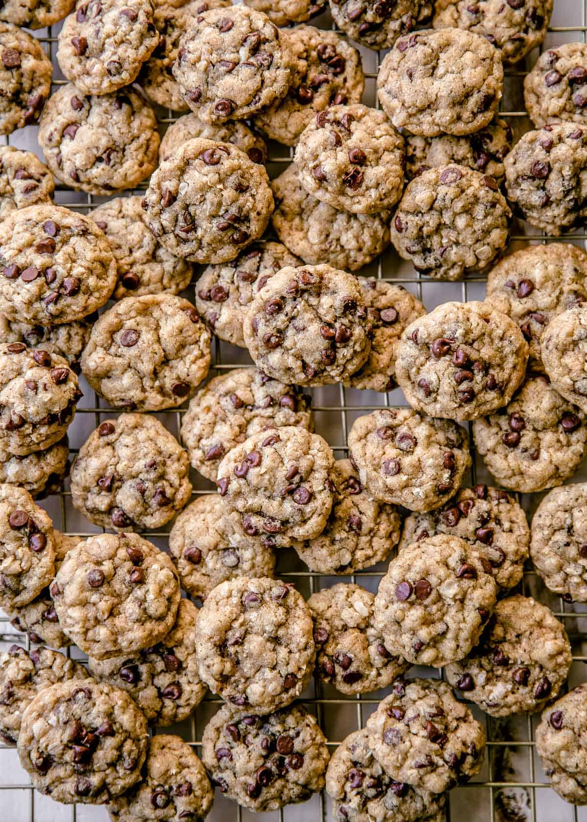 small cookies on a sheet pan